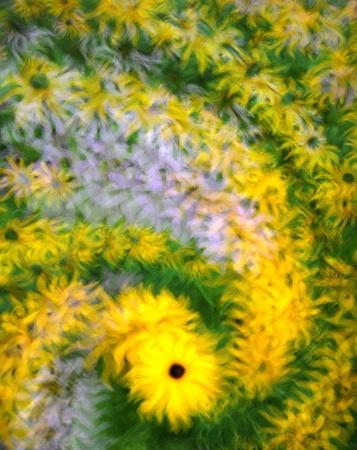 Flurry of Flowers