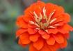 """""""Orange Petal..."""