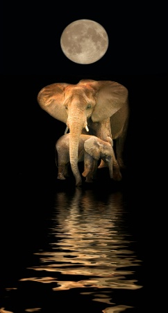 A Pair of Pachyderms (Mother & Nine-Month Son