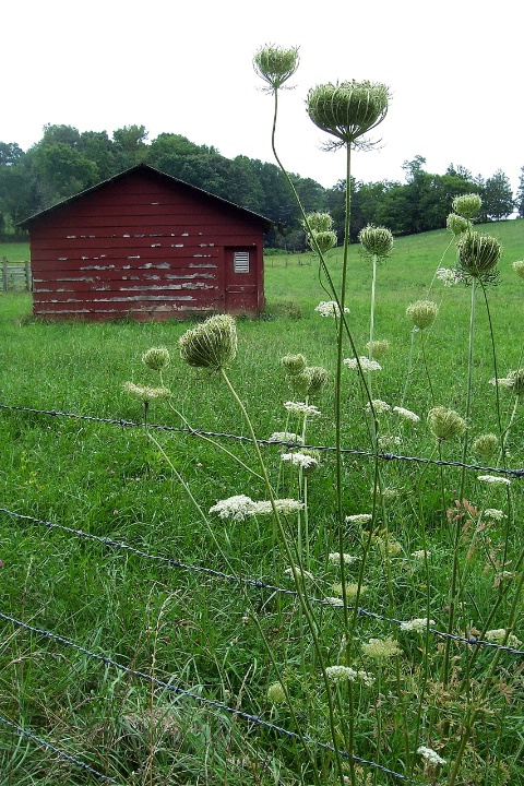 red barn and wildflowers......