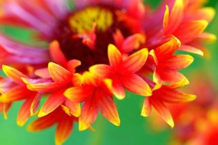 blanket flora
