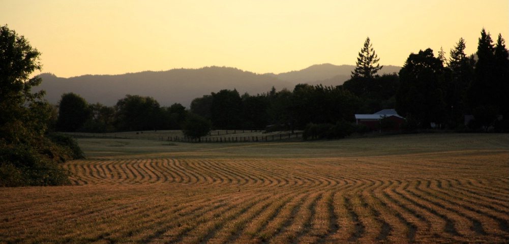 Field at the Sweet Light