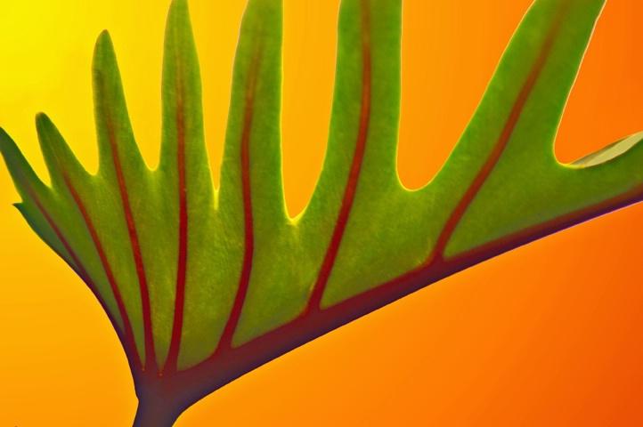 Foliar Design