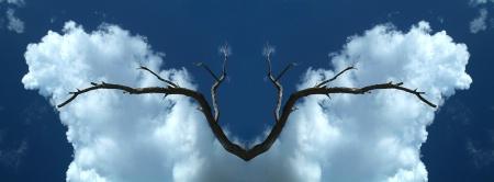 Mesquite Bird