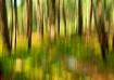 Blind Ash Pines