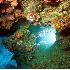 © Mike Keppell PhotoID # 2529599: Spotlight on the Reef