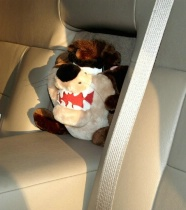 Taz goes for a ride