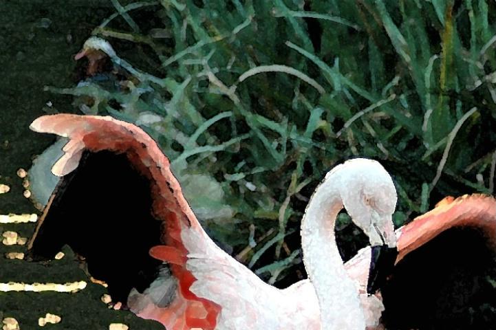 Dancing the Flamingo