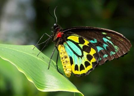 Toronto- Butterfly leaf