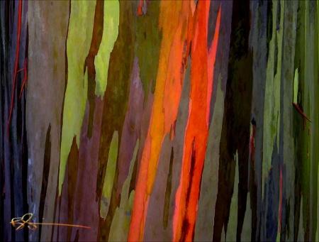 ~Rainbow Eucaliptus~