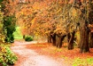 Pathway into fall