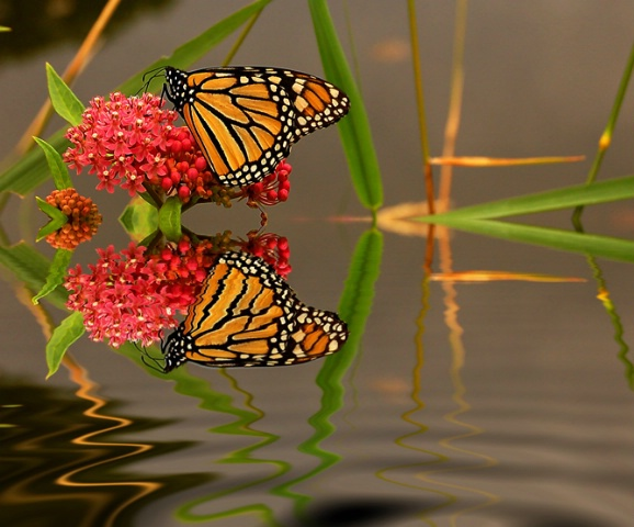 The Perfect Combo: Flower, Butterfly & Water