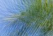 Palm and sky abst...
