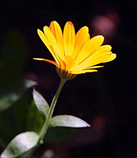 Yellow Glow.