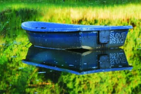 reflecting marsh