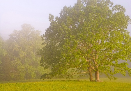 Foggy Cades Cove Morning