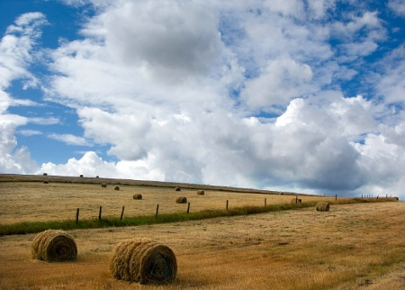 Round Bales on a Hillside