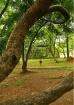 My Park, My Home