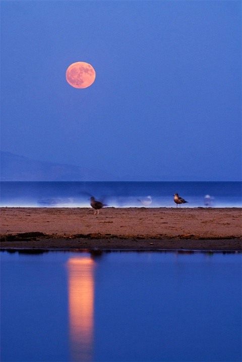 Rising Moon and birds