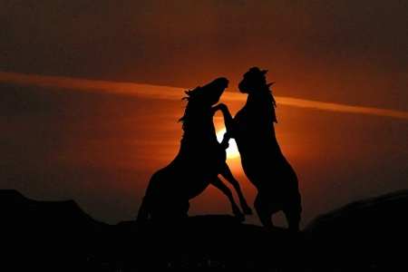 Duel At Sunrise