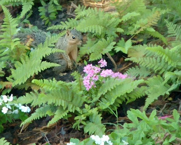 Alice the Squirrel