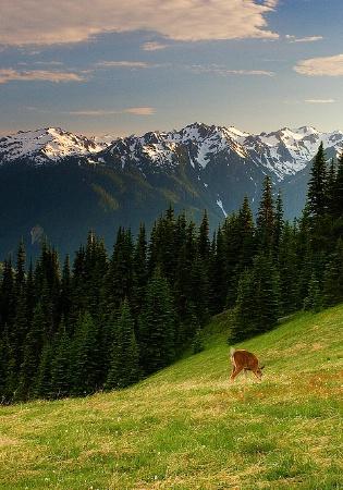Peaceful Meadows