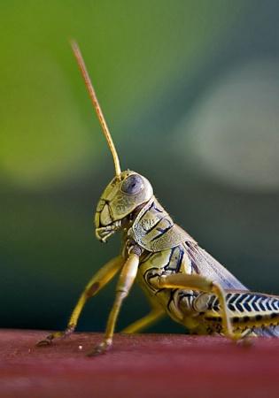 Grasshopper 02