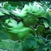 LITTLE GREEN APPL...