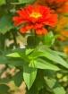flower light buzz...