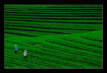 The story of Two Farmers