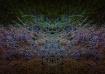Psychadelic Grass...