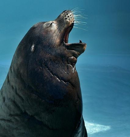 Old Man Yawn