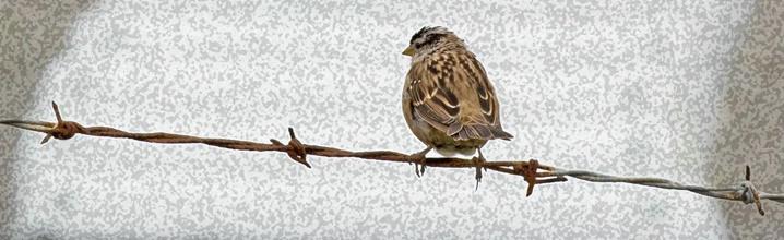 Bird on Barb