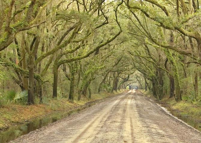 Botany Bay Road, Edisto Island - ID: 2644700 © george w. sharpton