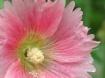 Bugged Bloom