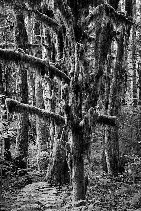Mossy Tree - ID: 2663805 © Brian d. Reed