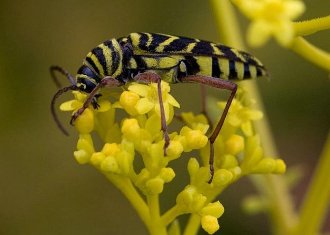 Yellow and Black - ID: 2664402 © Jim Kinnunen