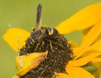 Krusty The Bee