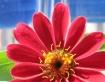 Red Flower#1