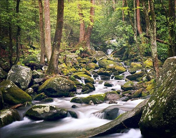 Smoky Mountain Stream - ID: 2678738 © Brian d. Reed