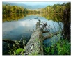 - Lake Glory -