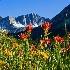 © Phil Burdick PhotoID # 2735069: Bishop Creek Flowers