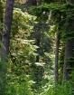 Forest Light 3
