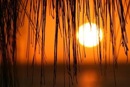 Casuarina sunset