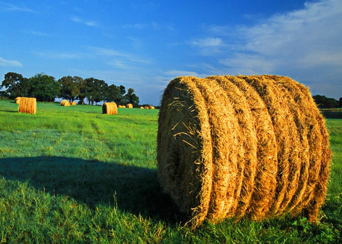Haybales at First Light