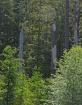 Forest Light 4