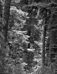 Forest Light 3-bw