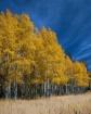 Fall in Rocky Mou...