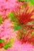 Visayan Floral Ab...
