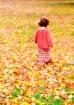 Crunching Autumn ...
